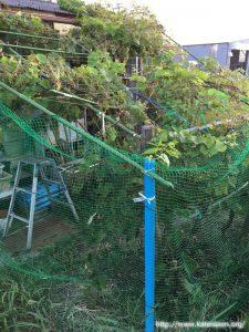 ぶどうの園芸ネット1